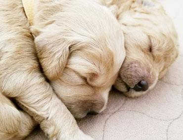 present-puppies